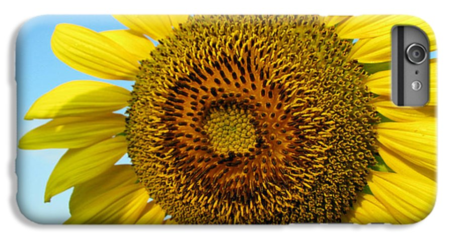 Sunflower IPhone 6s Plus Case featuring the photograph Sunflower Series by Amanda Barcon