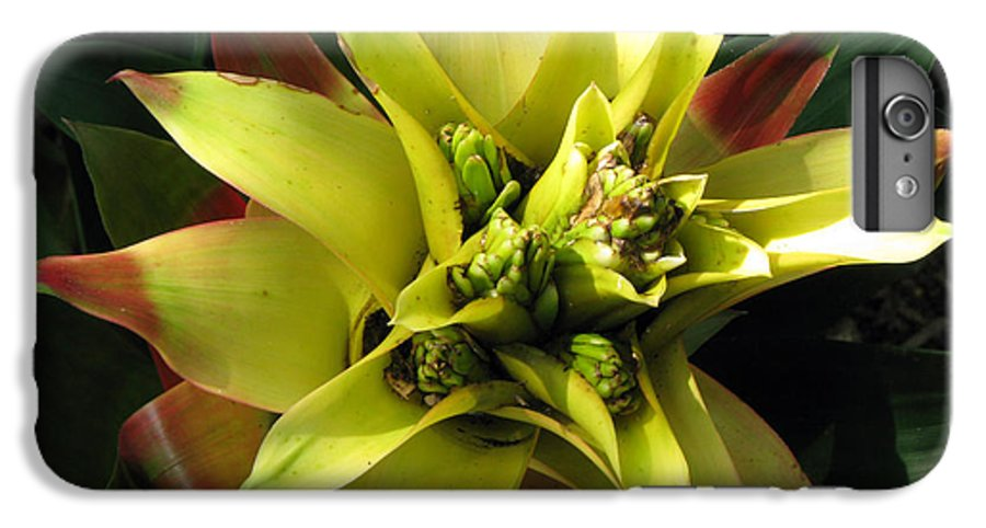 Tropical IPhone 6s Plus Case featuring the photograph Tropical by Amanda Barcon