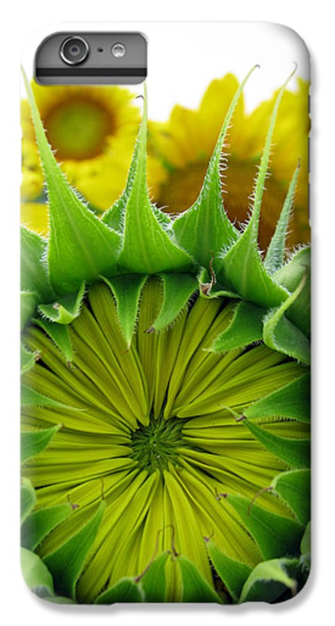 Sunflwoers IPhone 6s Plus Case featuring the photograph Sunflower Series by Amanda Barcon