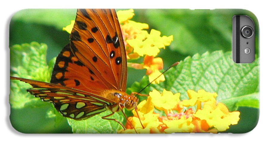 Butterfly IPhone 6s Plus Case featuring the photograph Butterfly by Amanda Barcon