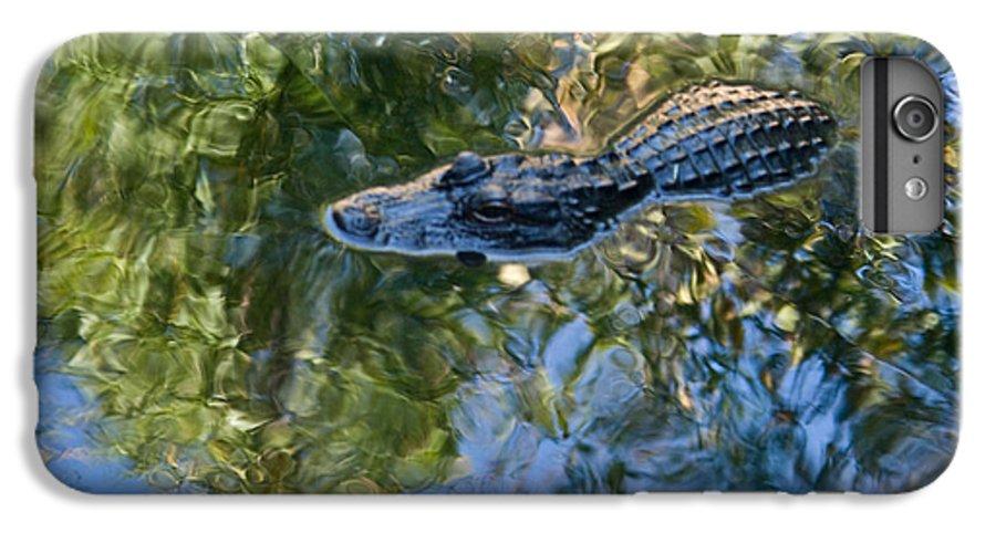 Alligator IPhone 6s Plus Case featuring the photograph Alligator Stalking by Douglas Barnett