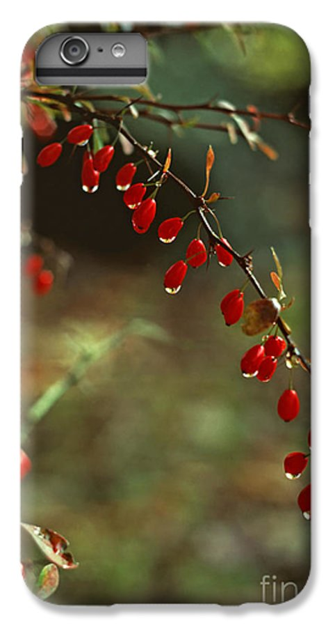 Pennsylvania IPhone 6s Plus Case featuring the photograph American Barberry With Raindrops by Anna Lisa Yoder