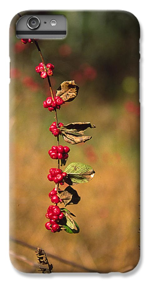 Fall Colors IPhone 6s Plus Case featuring the photograph Another Year by Randy Oberg