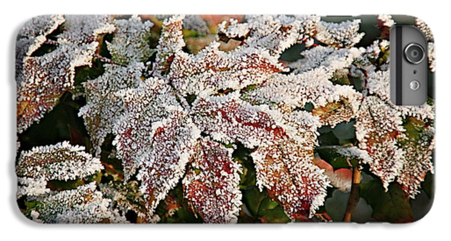 Fall IPhone 6s Plus Case featuring the photograph Autumn Leaves In A Frozen Winter World by Christine Till