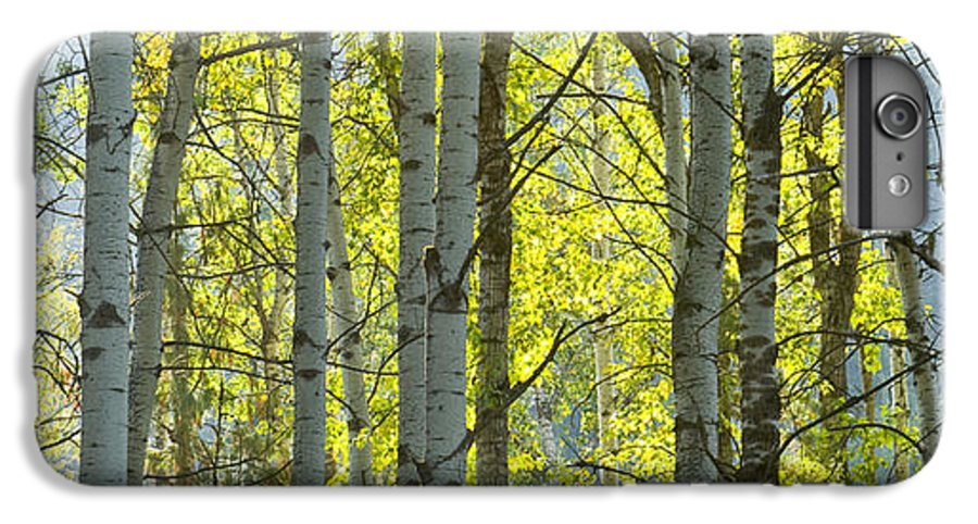 Trees IPhone 6s Plus Case featuring the photograph Autumn Through The Trees by Idaho Scenic Images Linda Lantzy