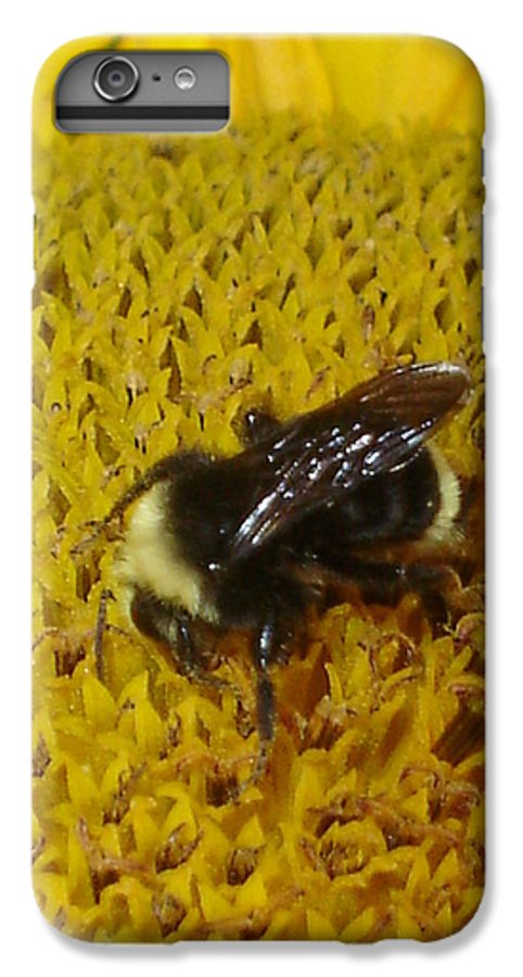 Bee IPhone 6s Plus Case featuring the photograph Bee On Sunflower 4 by Chandelle Hazen