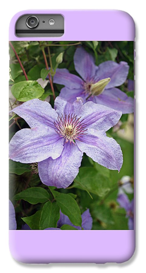 Clematis IPhone 6s Plus Case featuring the photograph Blue Clematis by Margie Wildblood