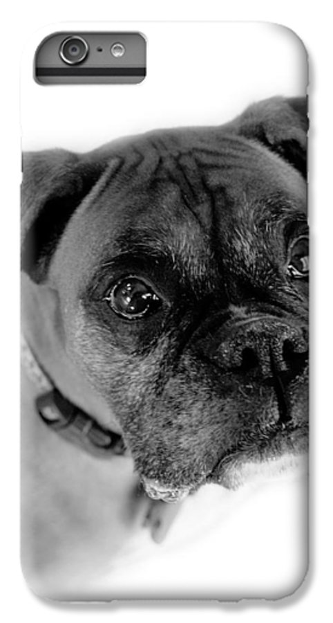 Boxer IPhone 6s Plus Case featuring the photograph Boxer Dog by Marilyn Hunt