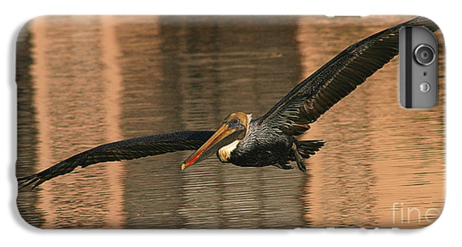 Pelican IPhone 6s Plus Case featuring the photograph Brown Pelican On A Sunset Flyby by Max Allen