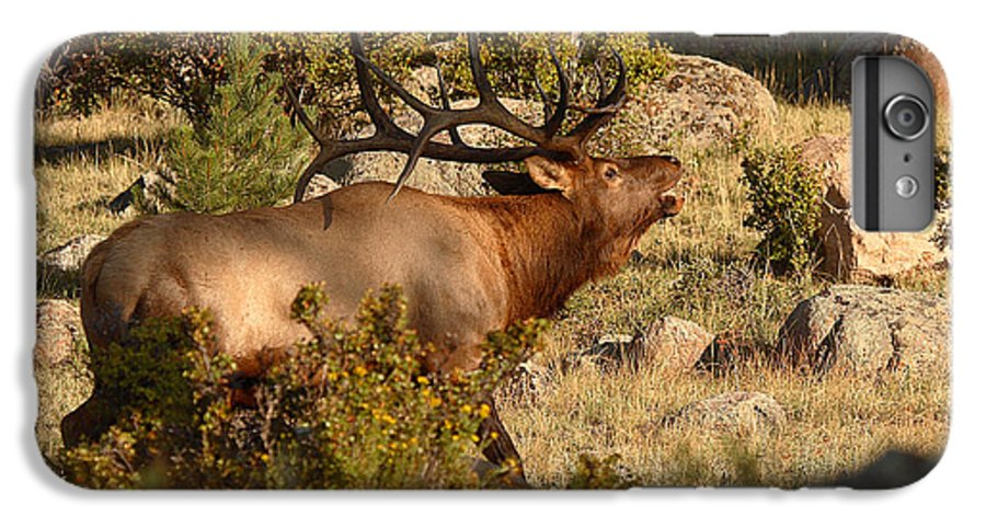 Elk IPhone 6s Plus Case featuring the photograph Bull Elk Bugling Among The Rocks by Max Allen