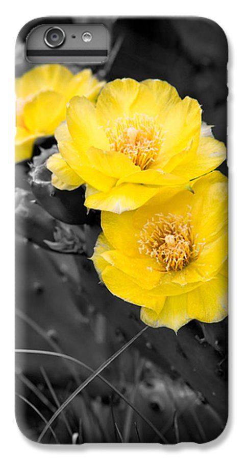 Cactus IPhone 6s Plus Case featuring the photograph Cactus Blossom by Christopher Holmes