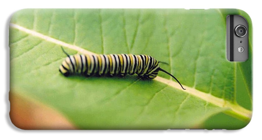 Caterpillar IPhone 6s Plus Case featuring the photograph Caterpillar by Kathy Schumann