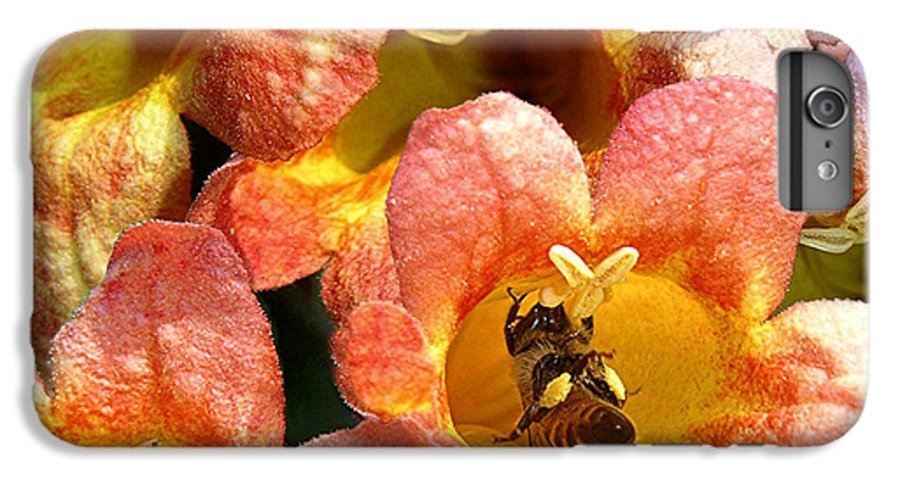 Nature IPhone 6s Plus Case featuring the photograph Caught Up In The Work by Lucyna A M Green