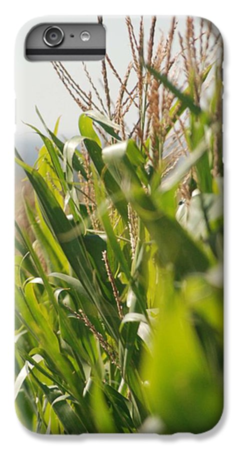 Corn IPhone 6s Plus Case featuring the photograph Corn Country by Margaret Fortunato
