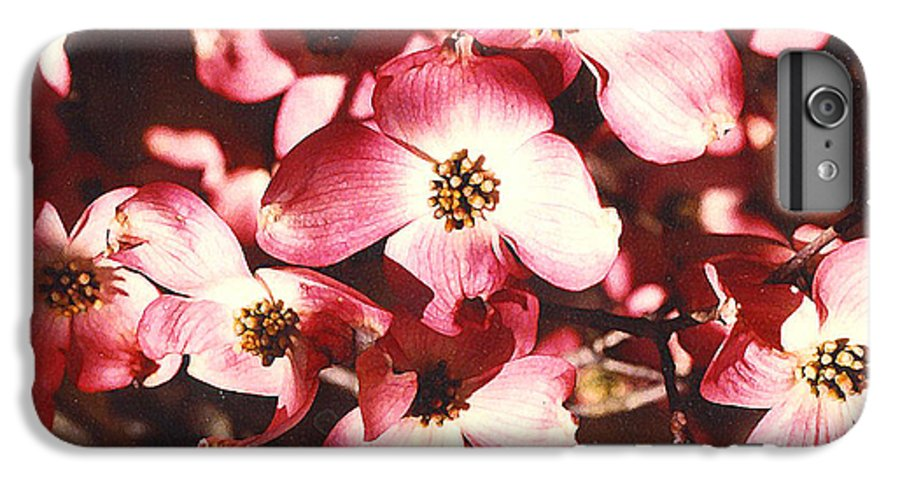 Dogwood IPhone 6s Plus Case featuring the photograph Dogwood Harmony by Nancy Mueller