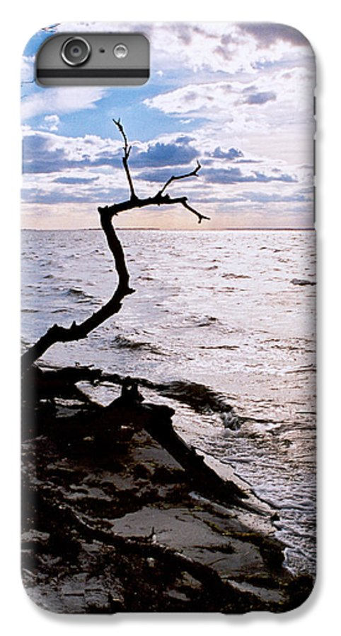 Barnegat IPhone 6s Plus Case featuring the photograph Driftwood Dragon-barnegat Bay by Steve Karol
