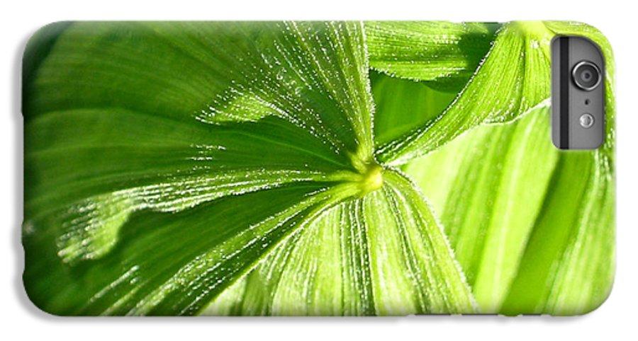 Plant IPhone 6s Plus Case featuring the photograph Emerging Plants by Douglas Barnett