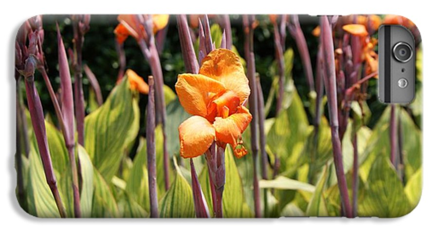 Floral IPhone 6s Plus Case featuring the photograph Field For Iris by Shelley Jones