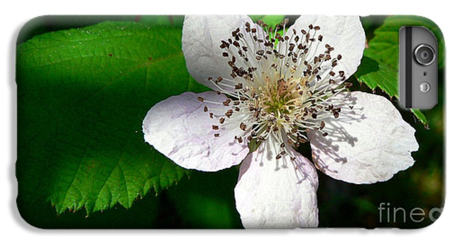 Flower IPhone 6s Plus Case featuring the photograph Flower In Shadow by Larry Keahey