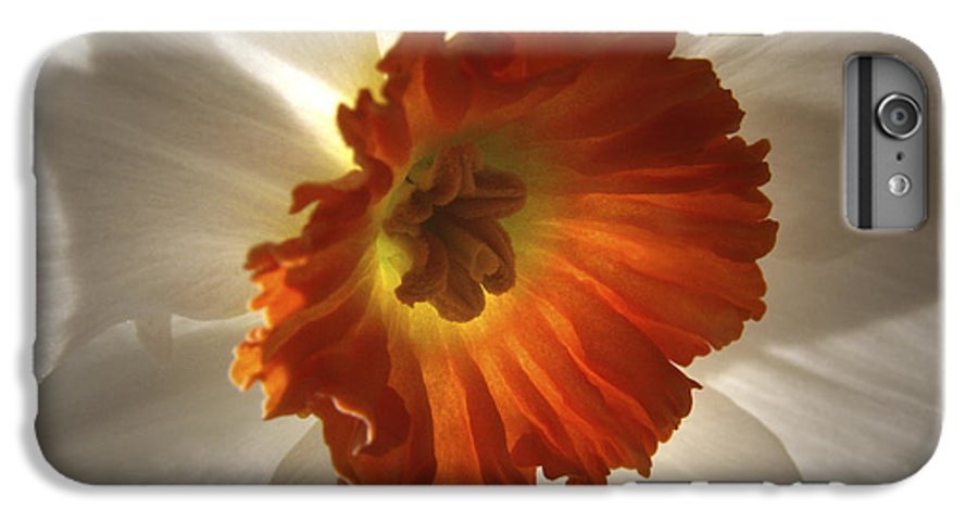 Flowers IPhone 6s Plus Case featuring the photograph Flower Narcissus by Nancy Griswold