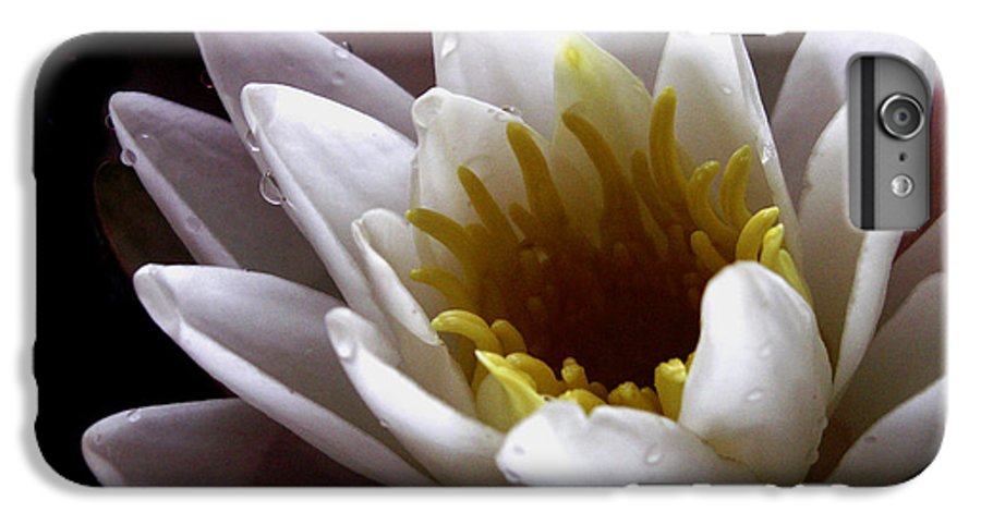 Flowers IPhone 6s Plus Case featuring the photograph Flower Waterlily by Nancy Griswold