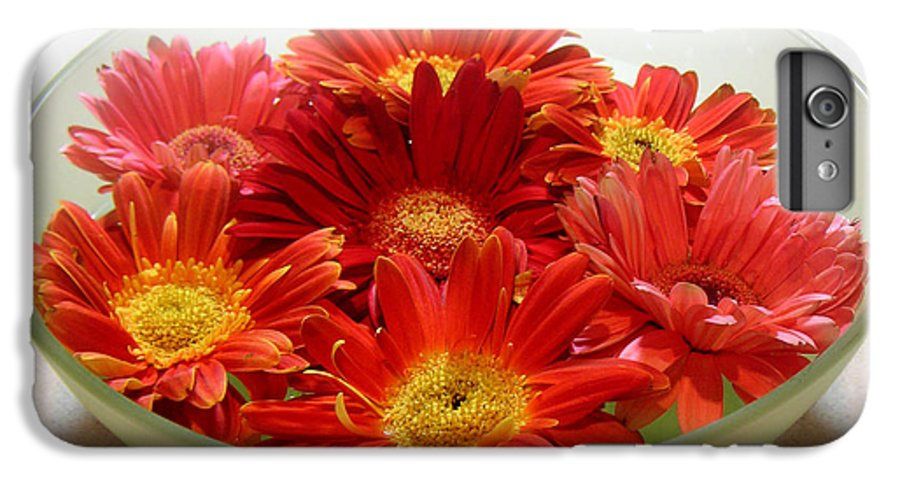 Nature IPhone 6s Plus Case featuring the photograph Gerbera Daisies - A Bowl Full by Lucyna A M Green