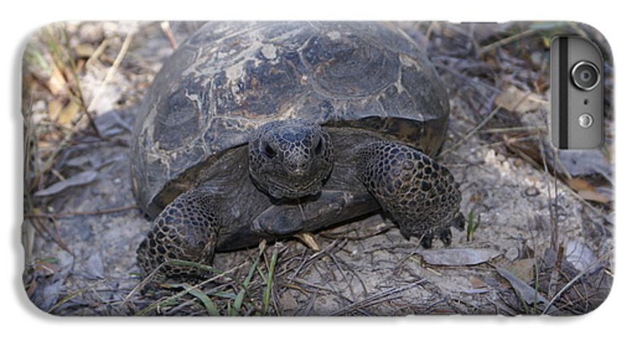 Turtle IPhone 6s Plus Case featuring the painting Golpher Mom 2 by Debbie May