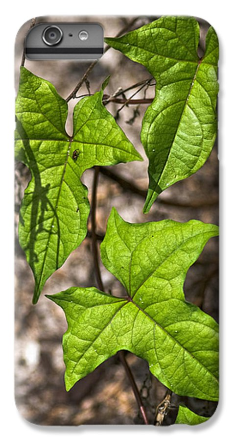 Green IPhone 6s Plus Case featuring the photograph Green Arrowheads by Christopher Holmes