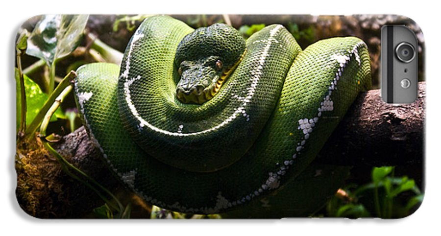 Green IPhone 6s Plus Case featuring the photograph Green Boa by Douglas Barnett