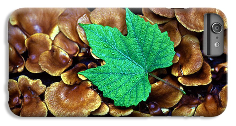Nature IPhone 6s Plus Case featuring the photograph Green Leaf On Fungus by Carl Purcell