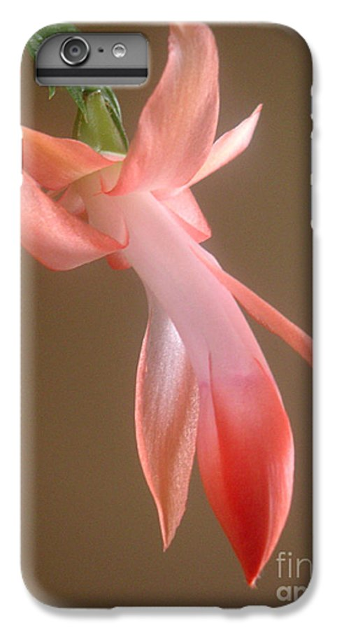 Nature IPhone 6s Plus Case featuring the photograph Holiday Cactus - In Day Light by Lucyna A M Green