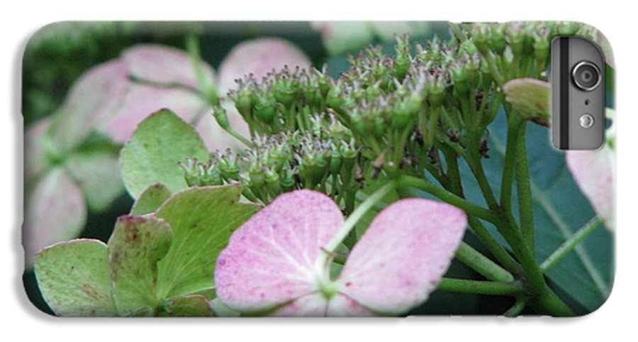 Hydrangea IPhone 6s Plus Case featuring the photograph Hydrangea by Amanda Barcon