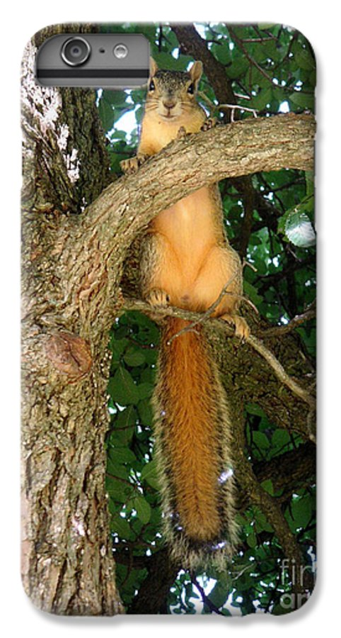 Nature IPhone 6s Plus Case featuring the photograph Just Hanging Around by Lucyna A M Green