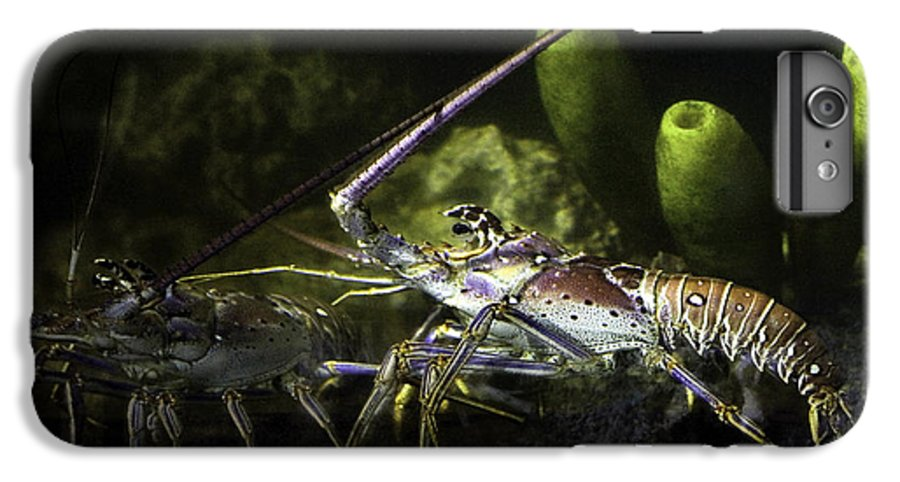 Lobster IPhone 6s Plus Case featuring the photograph Lobster In Love by Marilyn Hunt