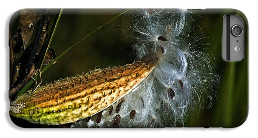 Autumn IPhone 6s Plus Case featuring the photograph Milkweed Pod by Al Mueller