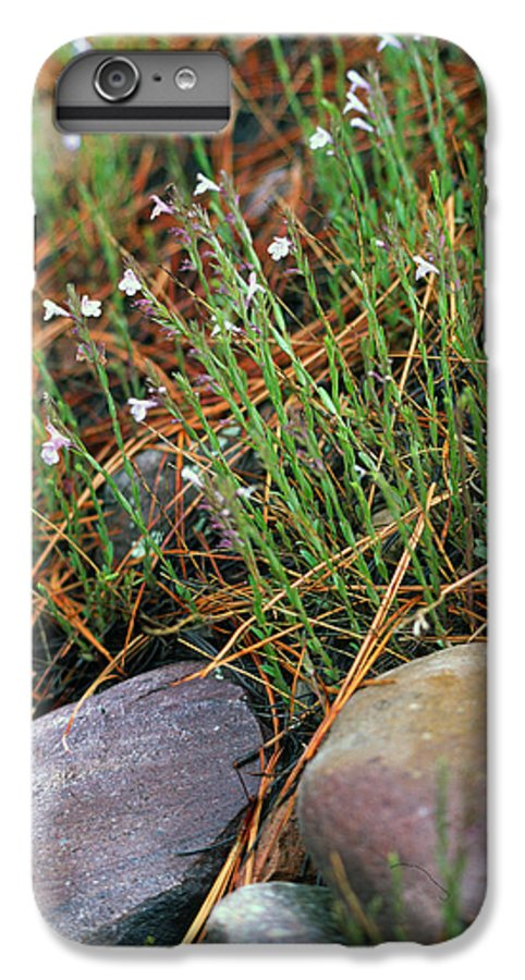 Forest Floor IPhone 6s Plus Case featuring the photograph Miniature Bells by Randy Oberg