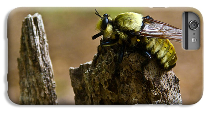 Fly IPhone 6s Plus Case featuring the photograph Mrs. Fly by Douglas Barnett