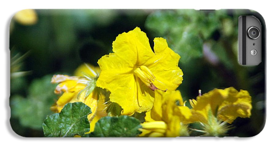 Flower IPhone 6s Plus Case featuring the photograph Nasty Weed by Margaret Fortunato