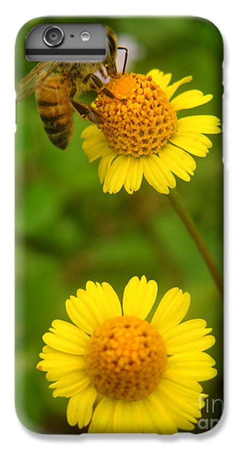 Nature IPhone 6s Plus Case featuring the photograph Nature In The Wild - Hanging In There by Lucyna A M Green