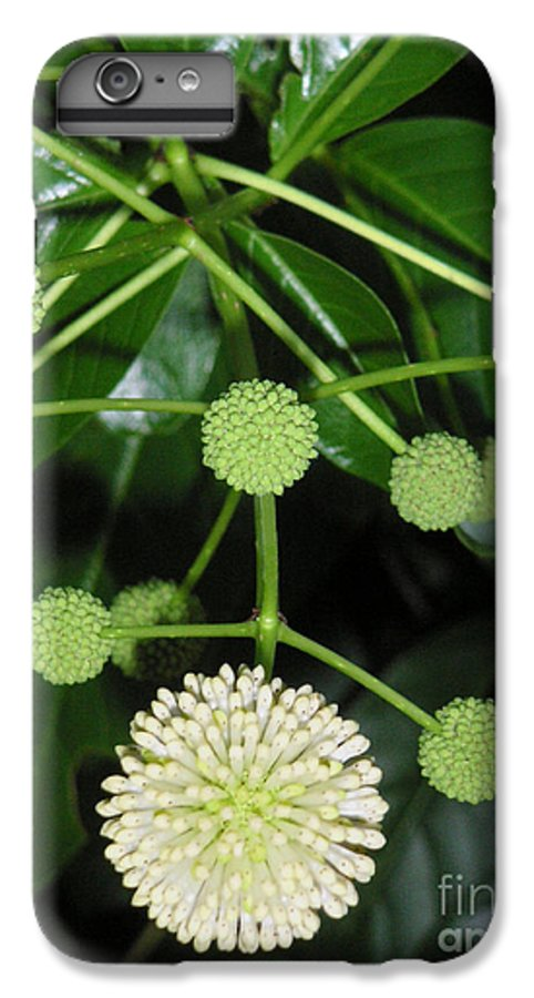 Nature IPhone 6s Plus Case featuring the photograph Nature In The Wild - Natural Pom Poms by Lucyna A M Green