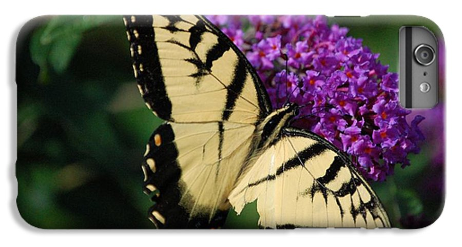 Butterfly IPhone 6s Plus Case featuring the photograph Nothing Is Perfect by Debbi Granruth