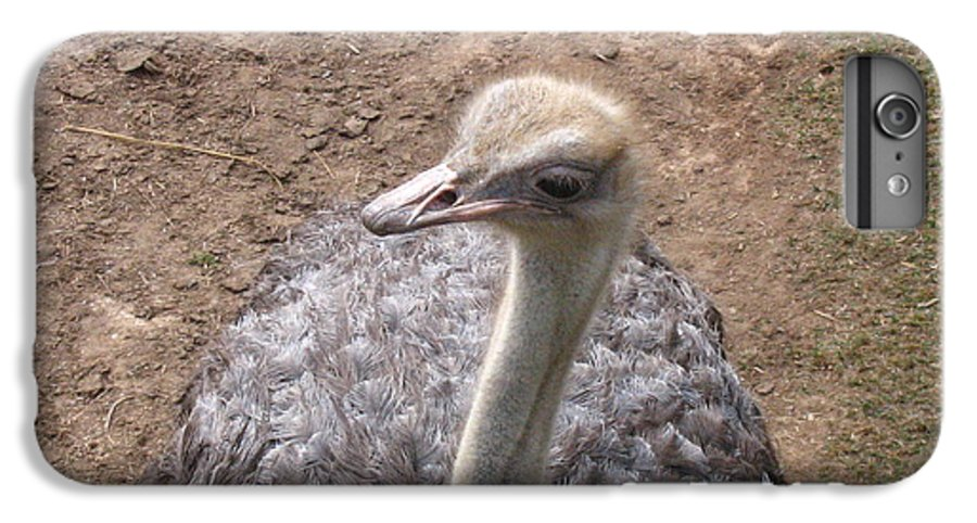 Ostrich IPhone 6s Plus Case featuring the photograph Ostrich by Melissa Parks