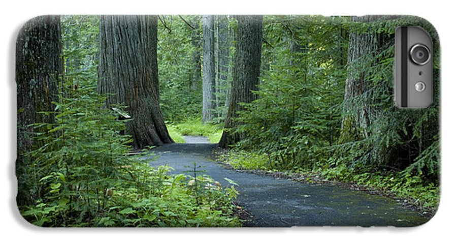 Grove IPhone 6s Plus Case featuring the photograph Path Through The Cedars by Idaho Scenic Images Linda Lantzy