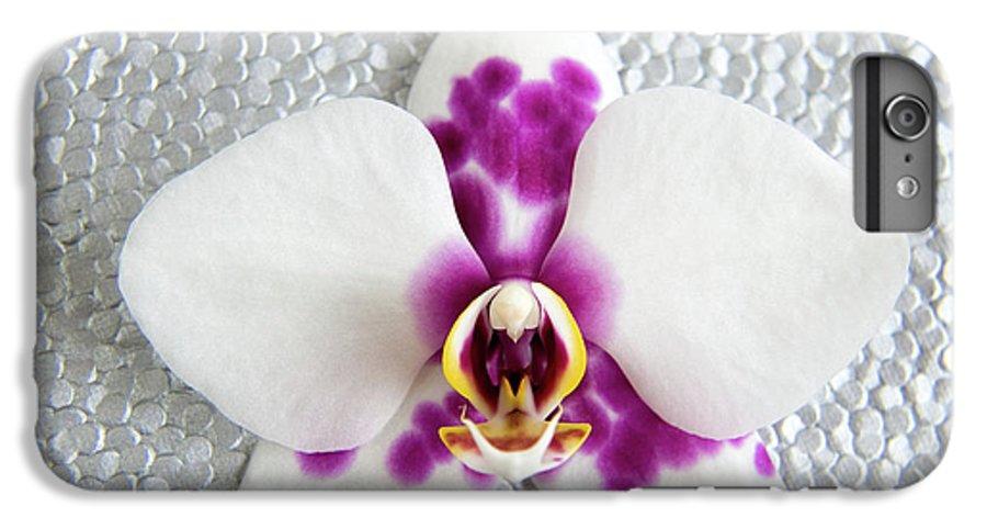 Nature IPhone 6s Plus Case featuring the photograph Phalaenopsis Yu Pin Panda by Julia Hiebaum