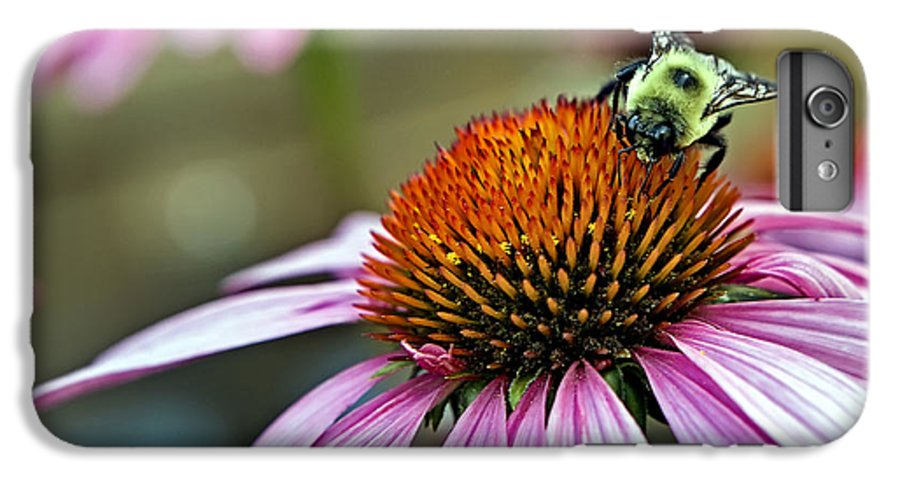 Macro IPhone 6s Plus Case featuring the photograph Purple Cone Flower And Bee by Al Mueller