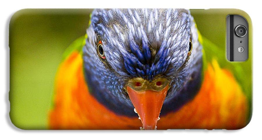 Rainbow Lorikeet IPhone 6s Plus Case featuring the photograph Rainbow Lorikeet by Sheila Smart Fine Art Photography