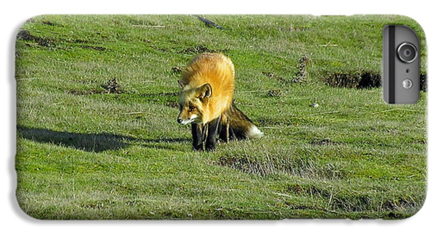 Fox IPhone 6s Plus Case featuring the photograph Red Fox by Louise Magno