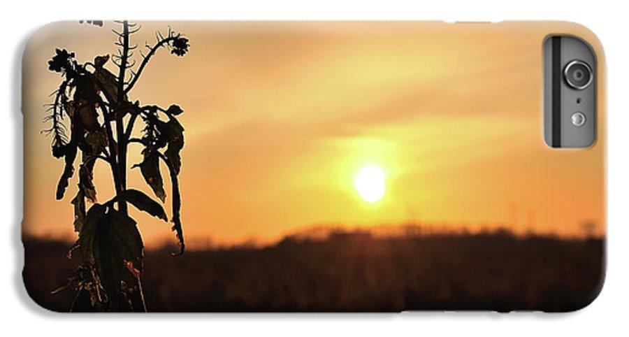 Sonnenuntergang Blume Flowwer Sky Himmel IPhone 6s Plus Case featuring the photograph Sonnenuntergang by Scimitarable