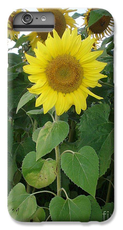 Sunflower's IPhone 6s Plus Case featuring the photograph Sunflower Amungst Sunflower's by Chandelle Hazen