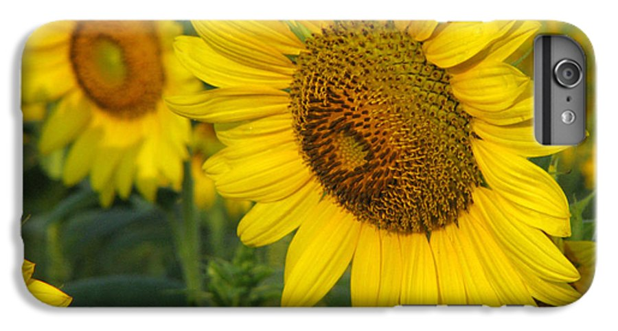 Sunflowers IPhone 6s Plus Case featuring the photograph Sunflower Series by Amanda Barcon